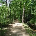 Natuur in de omgeving van Camping de Wije Werelt