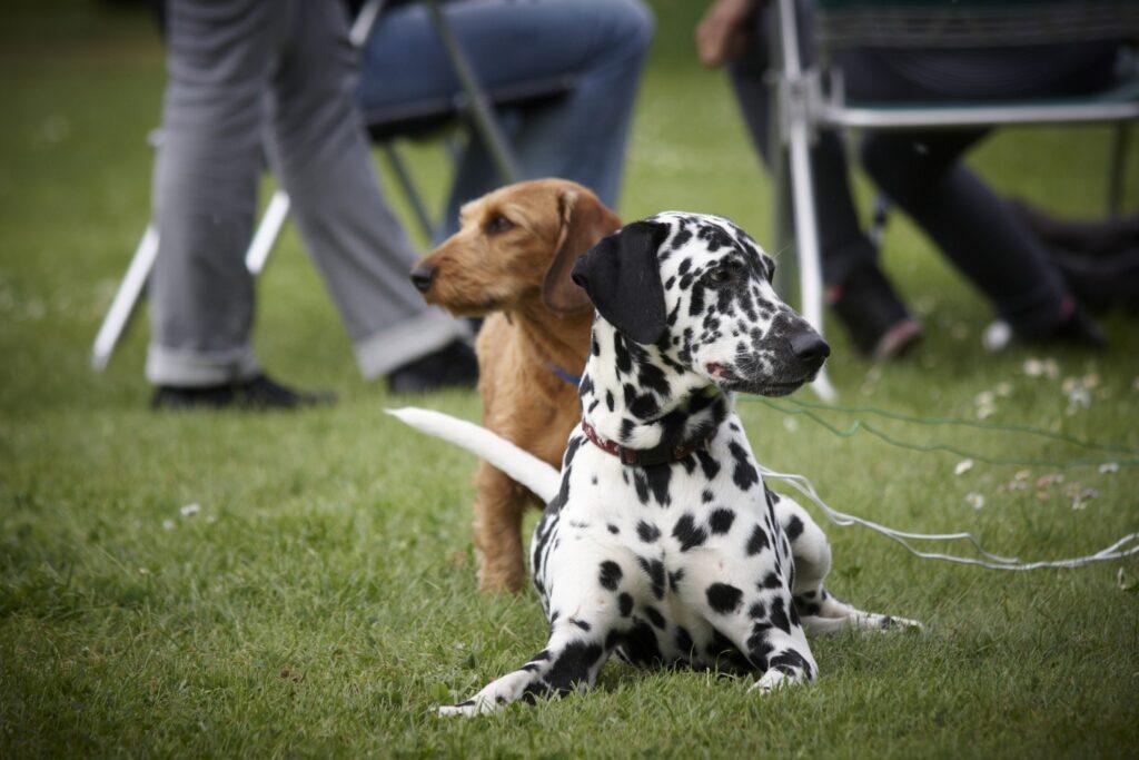 Vakantie met hond omheinde tuin